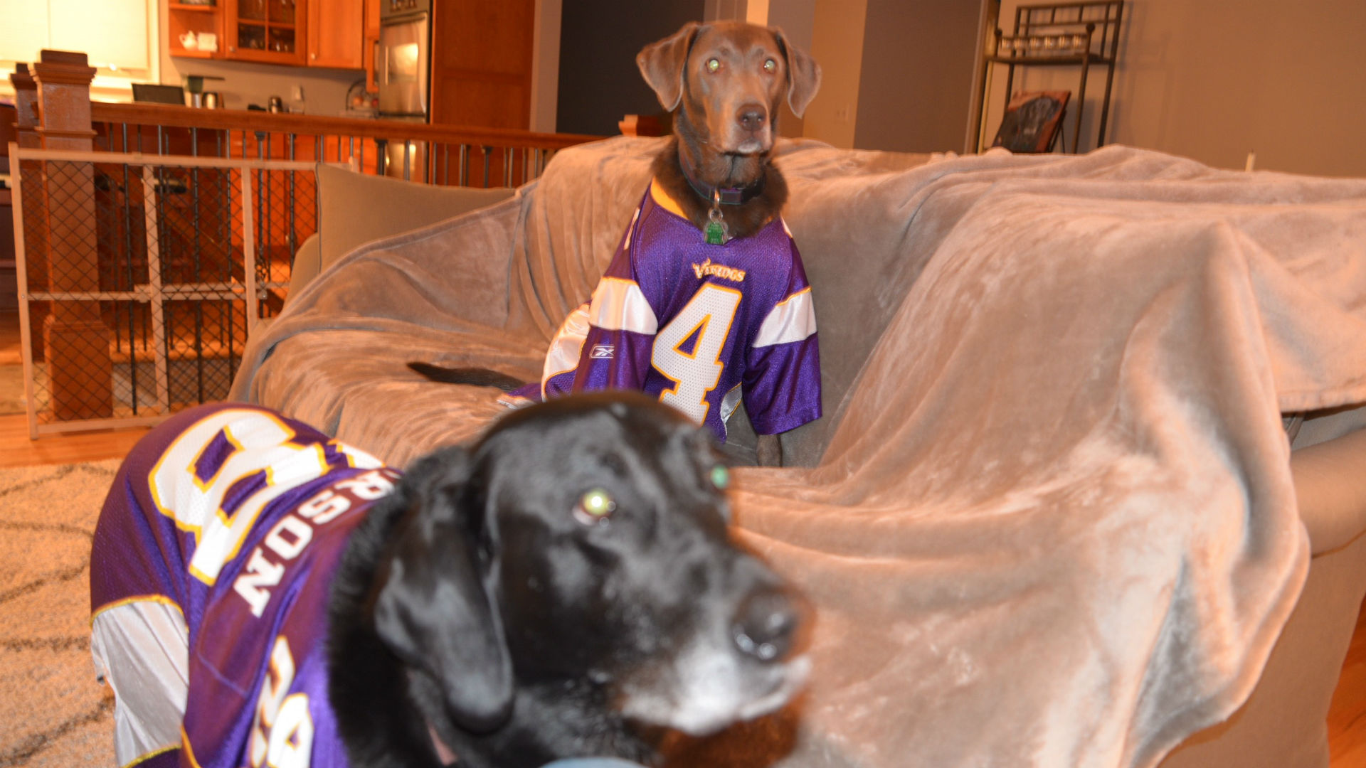 Send us a photo: Show off your pet in Vikings gear - StarTribune.com